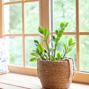 知っておきたい!観葉植物につく害虫10種の紹介と駆除の方法