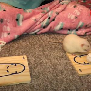 天才ネズミ姉妹!ネズミがバスケ?ご褒美を巡る熾烈な争い!勝ったのはいったいどっち!??