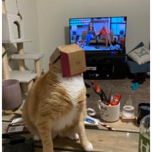 「ウチのネコどうしちゃったんだ?」 飼い主さんをビックリさせてしまったネコたち Part2
