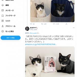 藤あや子さん「朝起きて洗面所行ったらこれだもんずるいよー」可愛い猫画像ツイートがまたまた大反響!フォトブックも発売中