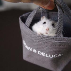 ハムスターが「DEAN & DELUCA ミ二バッグ」に入ったら……? お出かけ姿に可愛いの嵐