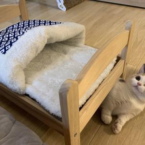 「そこじゃないのよ!」猫用のベッドを用意したのに布団の上では寝ない猫がかわいすぎる