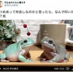 「まるで漫才」仲良しそうな2匹なのに突如として相手を叩く! かわいすぎるカエルの動画が話題に