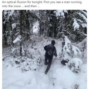 Twitterに投稿された画像の正体が議論に 「男が森の中に逃げ込もうとしてるのかな」「ボクの目は真っ先に犬だと認識しました」「ビッグフットでしょ」
