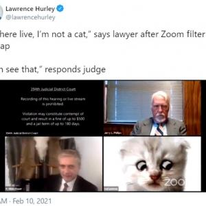 """大真面目なオンライン審問でネコのフィルターを外せなくなった弁護士さん 「""""私はネコじゃありませんからね""""という一言が最高すぎる」「笑いすぎて涙出ちゃったよ」"""