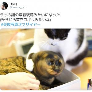 まるで暗殺現場!? 猫の失敗写真に注目集まる 「必殺仕事にゃん」「声出して笑った」