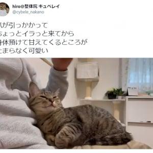 イライラ→甘えゴロンの変化がたまらない猫動画に10万超えいいね 「上目遣いかわいい」「最高」