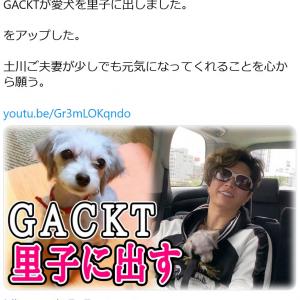 ペットロスの友人夫妻に元気になって欲しいと……「GACKTが愛犬を里子に出しました」動画に賛否