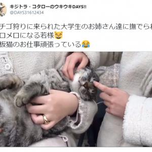 大学生のお姉さんたちに撫でられメロメロ…! とろける看板猫の動画が癒やし度120%