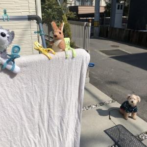 """犬が""""お気に入りおもちゃ""""を洗濯されてしまった結果→「なんて可愛い表情」「ぬいぐるみしかいない!」"""