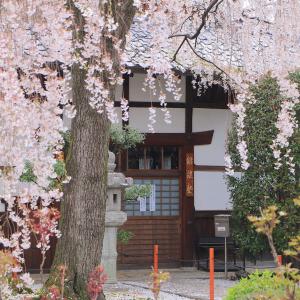 有名スポットだけじゃない!美しすぎる京都の「マイナー桜名所」BEST3