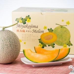 冬に食べられる甘~いメロン!! 贈答用にもぴったり『宮古島メロン』の美味しさに感動が止まらない!