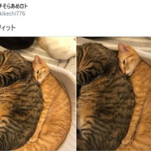 苦しくないの?ぴったりフィットしすぎた姿で寝ている猫