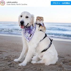 仲良しだからいつも一緒のワンコとニャンコ 「可愛さメガトン級」「犬と猫ってこんなに仲良くなれるのね」