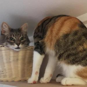 頭が取れちゃった!海外掲示板に投稿された1枚の写真が話題で人気者になった猫