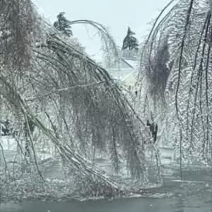"""街の木々が""""氷のシャンデリア""""のよう・・・魔法の世界のような美しい光景が話題に!"""