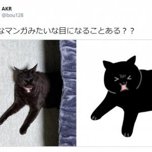 「そんなマンガみたいな目になることある??」 黒猫の奇跡の1枚がTwitterで大反響