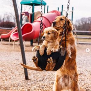子犬の面倒を見るのって大変だね 「最高のコンビ」「なんなのよ、もう」