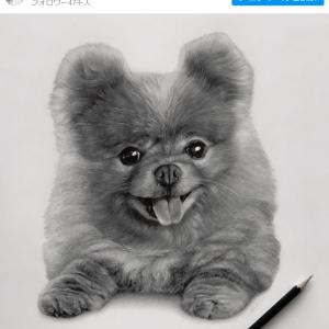 ハイパーリアリズムを追求するカナダのアーティストが描く超リアルな動物画 「モフモフ感がすごい」「どう見てもモノクロ写真にしか見えません」