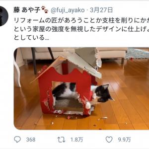 なんということでしょう…藤あや子さんの飼い猫・オレオちゃんによるリフォーム動画が話題に