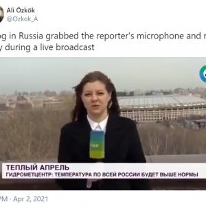 """ニュース番組の生放送中にレポーターがマイクを強奪される事件がロシアで発生 「""""操作されたメディア""""に対する抗議行動」「ニュースキャスターが無表情なのが笑える」"""