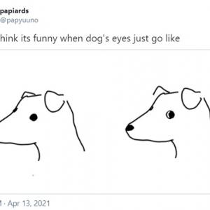 犬の横目って何のサインなんだろう 「遊んで欲しい時に横目で見てくることが多いかも」「こっちの出方を伺ってるんだよ」