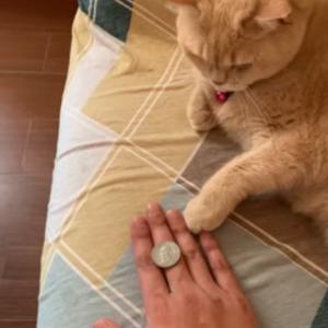 飼い主のトリックを見よう見まねで習得した天才猫が話題!「悟空のかめはめ波と同じだ」