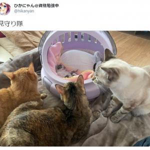 """赤ちゃん猫を囲む""""見守り隊""""の写真が癒やし度満点 「尊い」「もふりたい」と話題に"""