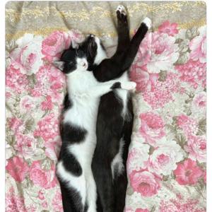 藤あや子さん「縦長サムネに対応したってことは…」 愛猫の長~い2ショットをさっそく投稿