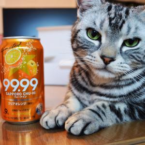 缶チューハイ「99.99」にクリアオレンジ味が新登場! 透明感抜群な飲み口とほのかなオレンジ果汁が最高だ!!!