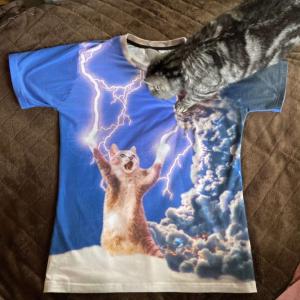 【奇跡の構図】Tシャツの写真を撮ろうとしたら猫が乱入!するとなぜか「終末戦争」みたいに?!