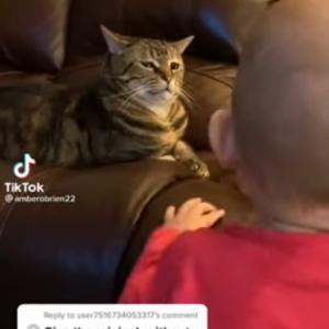 「なんて騒がしい生き物ニャ・・・」目の前で声を出す赤ちゃんを見るニャンコの表情がなんか笑える