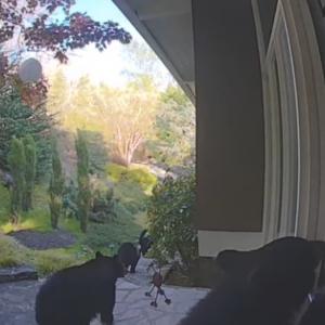 【予期せぬ訪問客】開ける前にカメラを確認して良かった!玄関のドアをノックするのはまさかの・・・