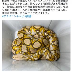 「かっこいい」「専門家すごい」 アミメニシキヘビ保護の体験型動物園『iZoo』園長に称賛の声多数
