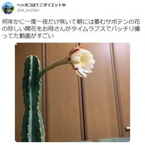 貴重映像! 何年かに一度一夜だけ咲くサボテンの開花を収めたタイムラプスが息をのむ美しさ