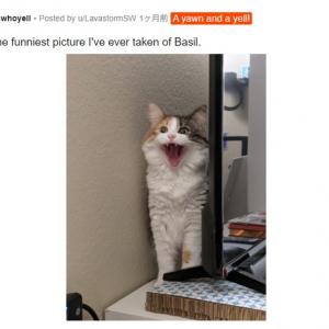 ネコの鳴き声が聞こえてきそうな写真 5選