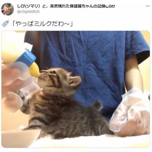 「やっぱミルクだわ~」赤ちゃん気分が抜けない子猫の動画がかわいすぎ 「耳がぴょこぴょこ」「満足そう」