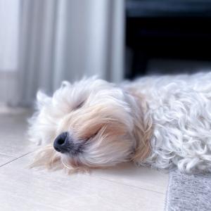 犬がそよ風にふかれた結果→「そよ風と一体化している」「可愛い!!!!」