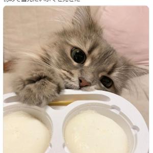 """""""雪見だいふく""""を初めて見た猫のお顔がこちら…… 「かわいすぎ」「夢の共演」と猫好き大歓喜"""