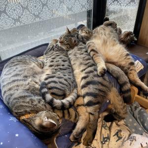 逆に暑くないか? ひんやり冷感マットで密になる大量の猫たちがかわいすぎると話題に