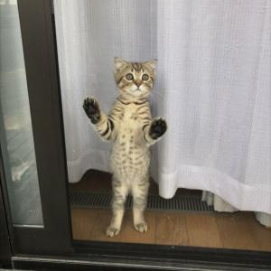 【ビフォーアフター面白画像】窓際に佇む子猫。この1年後・・・大きくなった上に子分ができた(笑)
