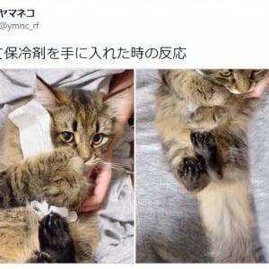 保冷剤を抱きしめる猫がかわいすぎ「こんな風に抱きしめられたい」「保冷剤になりたい」の声