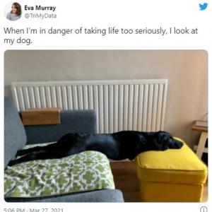 「人生について考えすぎた時は愛犬を見る」というツイートが共感を呼ぶ 「精神的支柱」「きっと大丈夫って言ってくれてるのよ」