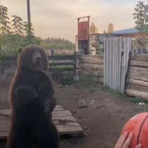 もしかして背中にチャックとか付いてる?! ボールをキャッチしてシュートを決めるクマがまるで人間