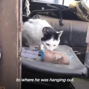 家猫ではなく野良猫を選んだニャンコ、お世話してくれる男性を毎朝職場でお迎え