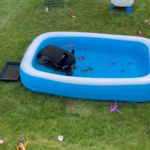 「暑いねえ・・・、ちょっとお邪魔するよ」こども用プールに涼みに来たのは・・・まさかの存在だった!!