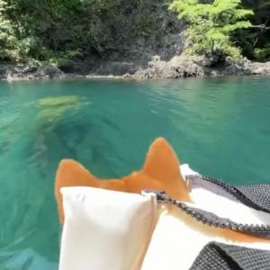 柴犬がカヤックで冒険する映像に「柴犬の後頭部可愛いすぎ」「綺麗なお水ですね~」の声
