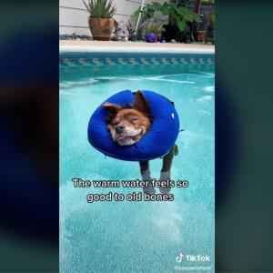 プールでまったり過ごす16才の老犬が話題 「人生はこうでなくっちゃ」「一緒に浮いていたい」