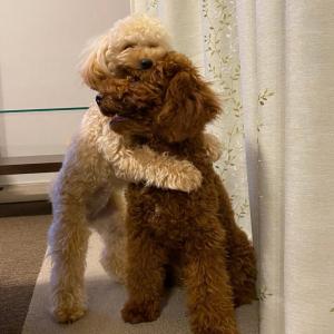 モフモフ犬同士の抱っこシーンがネットで反響「すんごい仲良し」「奇跡の1枚」