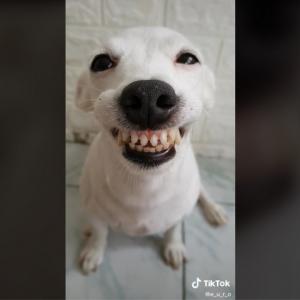 笑顔がまぶしすぎるジャック・ラッセル・テリア 「笑顔になれる投稿を毎回ありがとう」「犬じゃなくて天使」